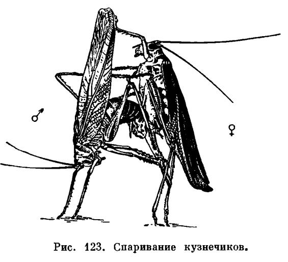 или Настоящие насекомые