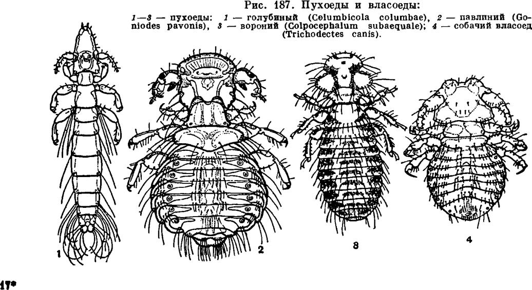 паразиты от птиц