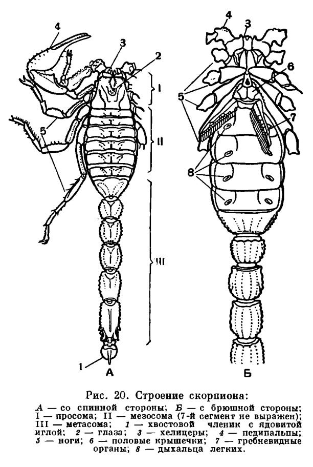 http://dic.academic.ru/pictures/enc_biology/animals/ris._3_20.jpg