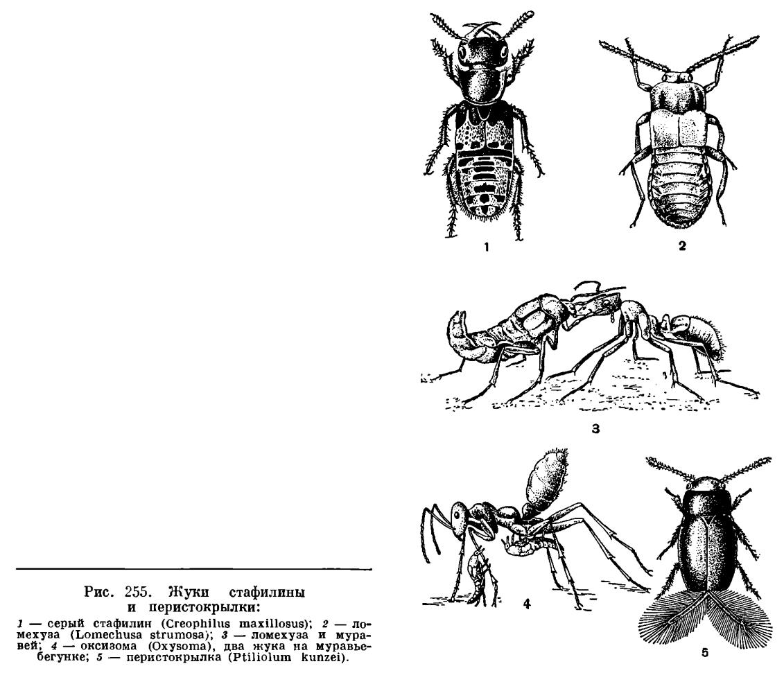 http://dic.academic.ru/pictures/enc_biology/animals/ris._3_255.jpg