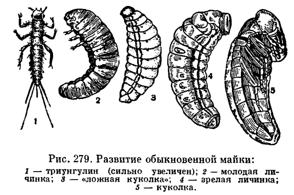http://dic.academic.ru/pictures/enc_biology/animals/ris._3_279.jpg
