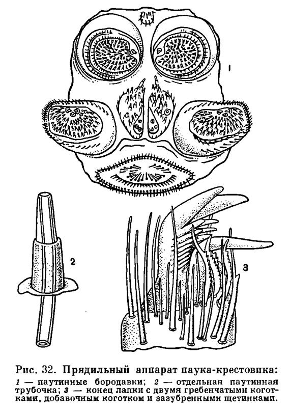 Средство от бородавок на пальцах ног