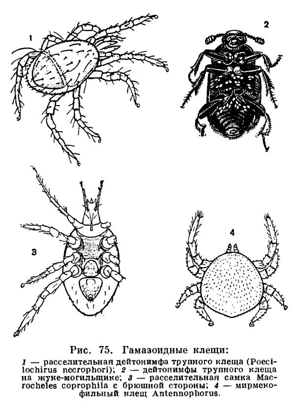 паразиты живущие в теле человека фото