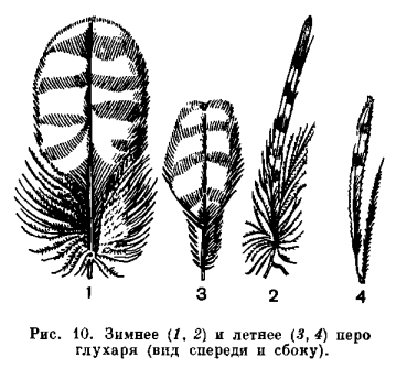 пуховой части пера или