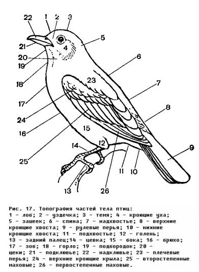 В области классификации птиц