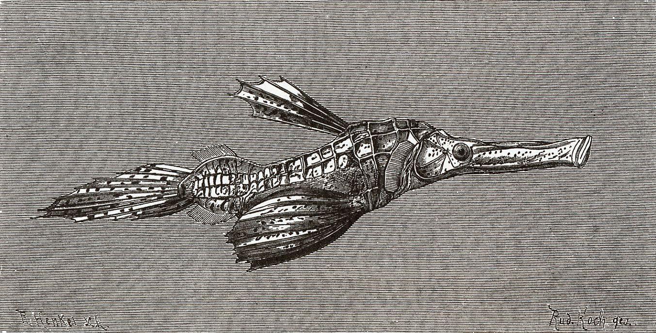 Трубкорыл (Solenostomus cyanopterum)