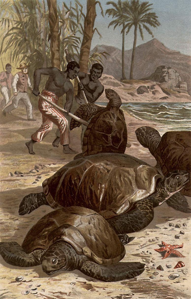 Зеленая, или суповая, черепаха (Chelonia mydas)