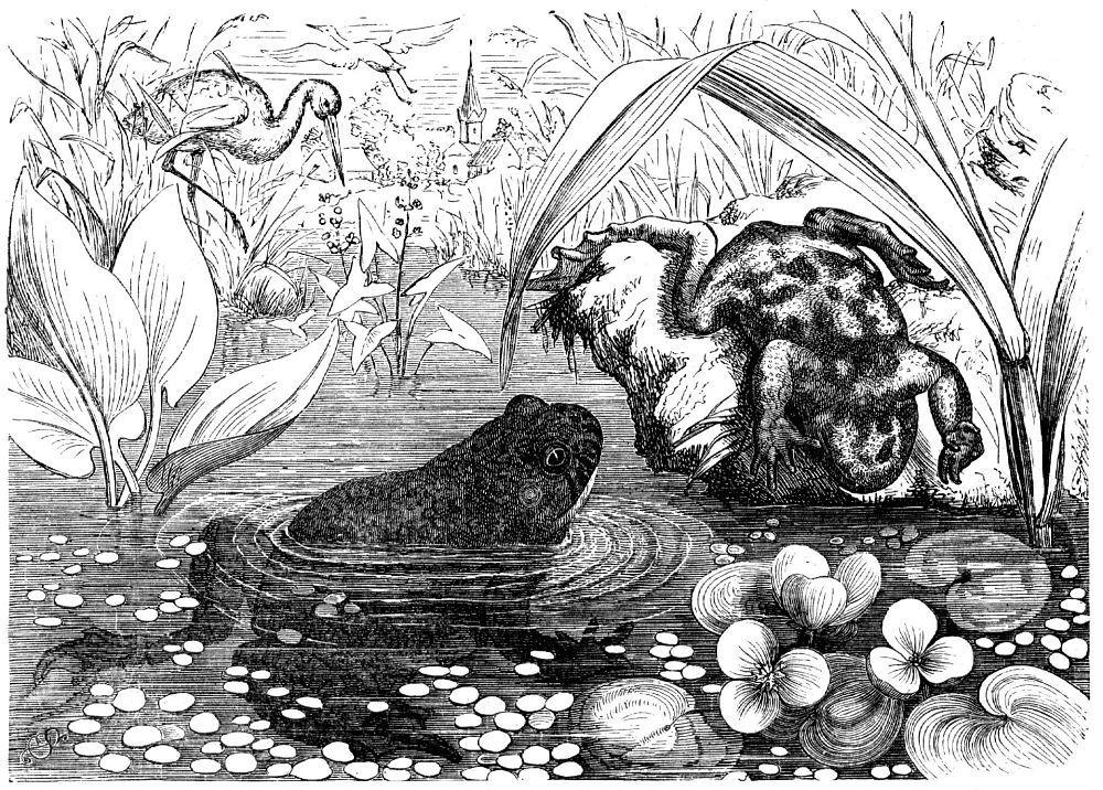 Желтобрюхая жерлянка (Вотbiпа variegata)