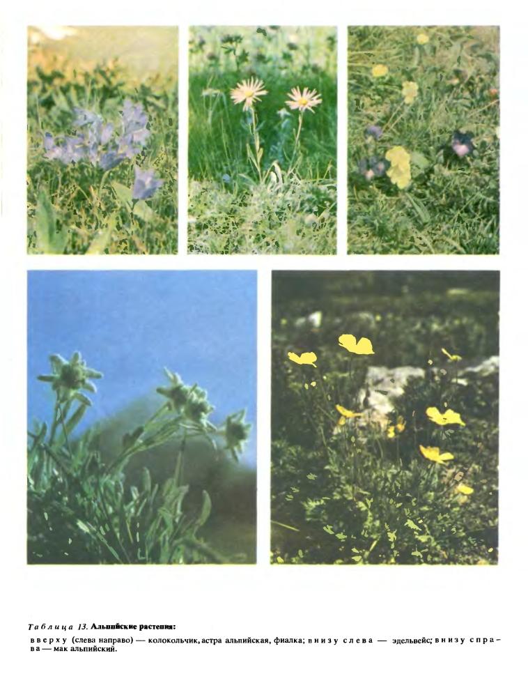 Растение и среда