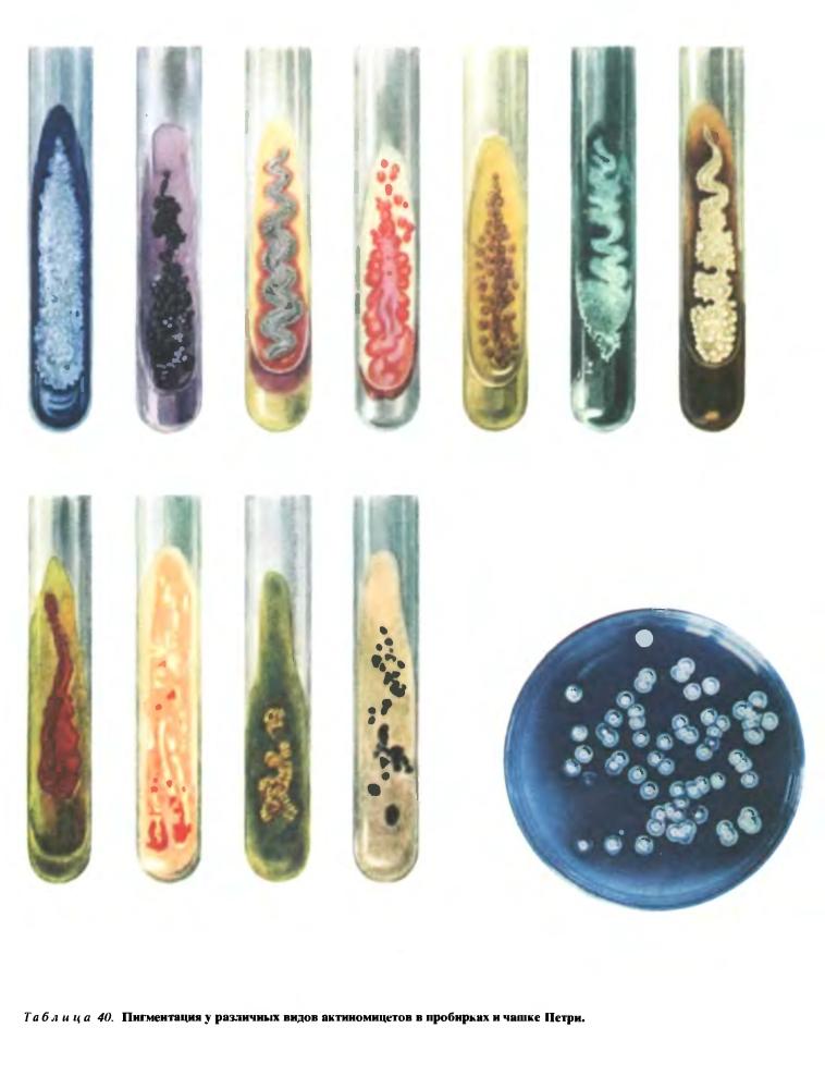 Культуральные свойства лучистых грибков