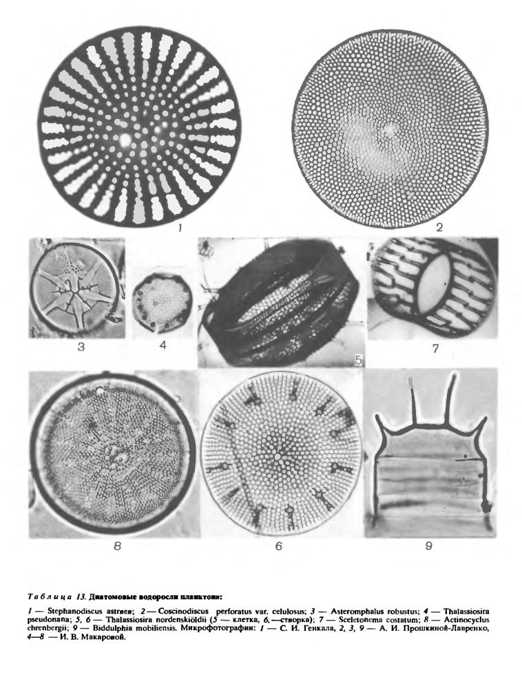 Биологические особенности диатомовых водорослей