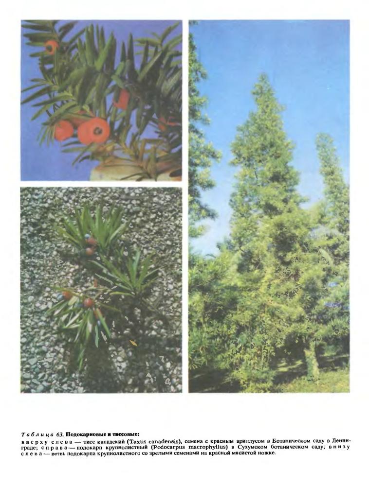 Купить семена деревьев и кустарников