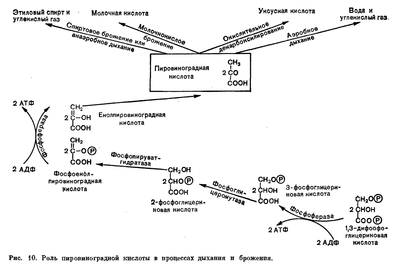 обмена веществ у животных схема