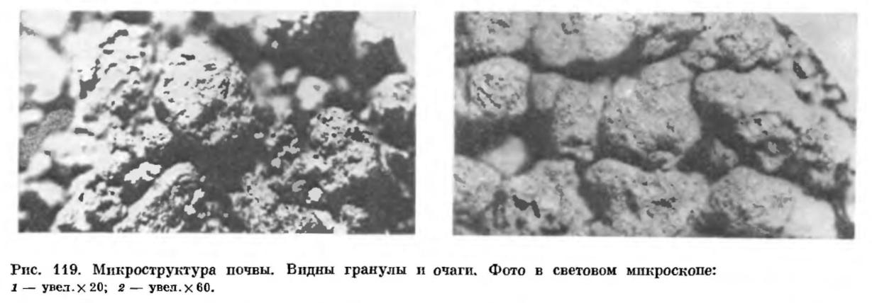 Почва как среда обитания микробов