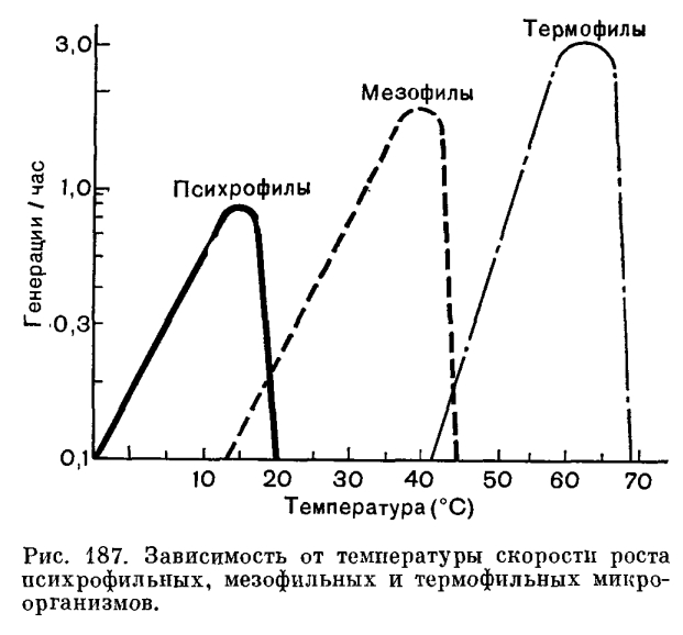 Микроорганизм  фото