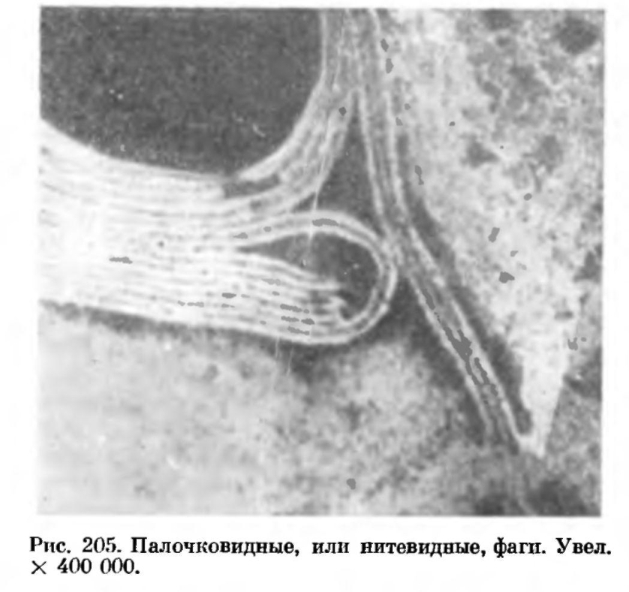 таблица паразитов человека