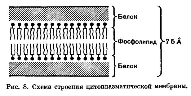 Строение и химический состав