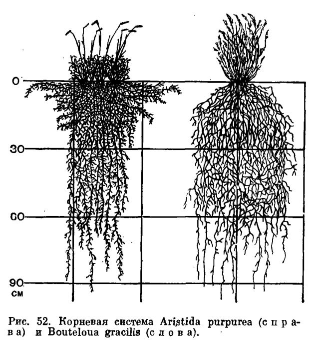Растение и среда - это... Что такое растение и среда?.