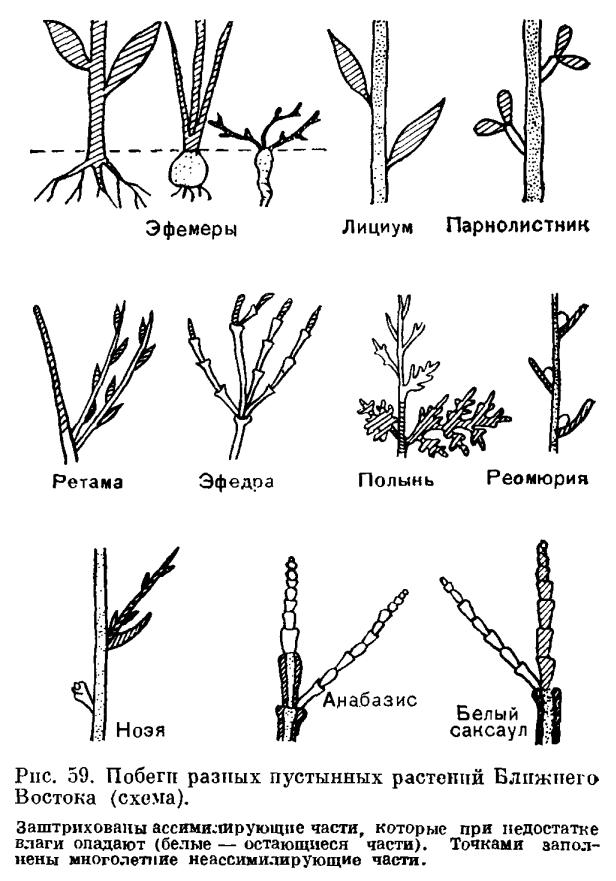 Особенности жизненных форм растений в арктике