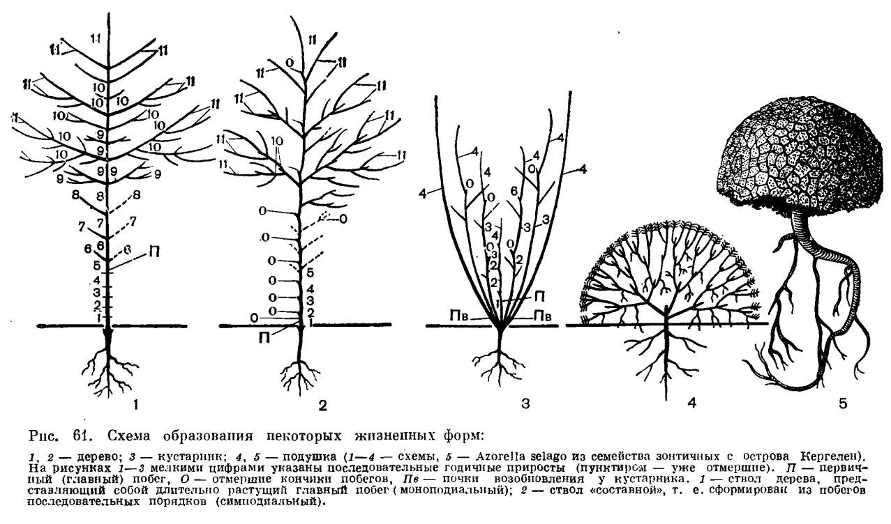 к жизненным формам растений относят