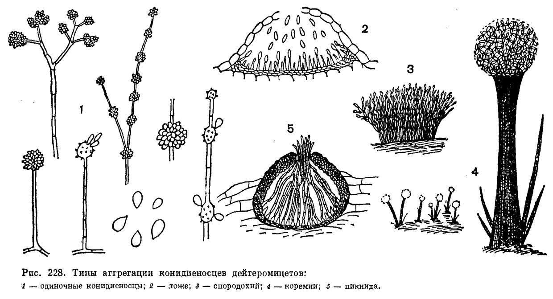 анализы на выявление паразитов в организме