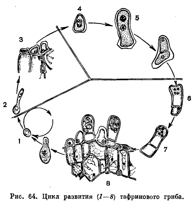 паразиты и грибы в организме человека