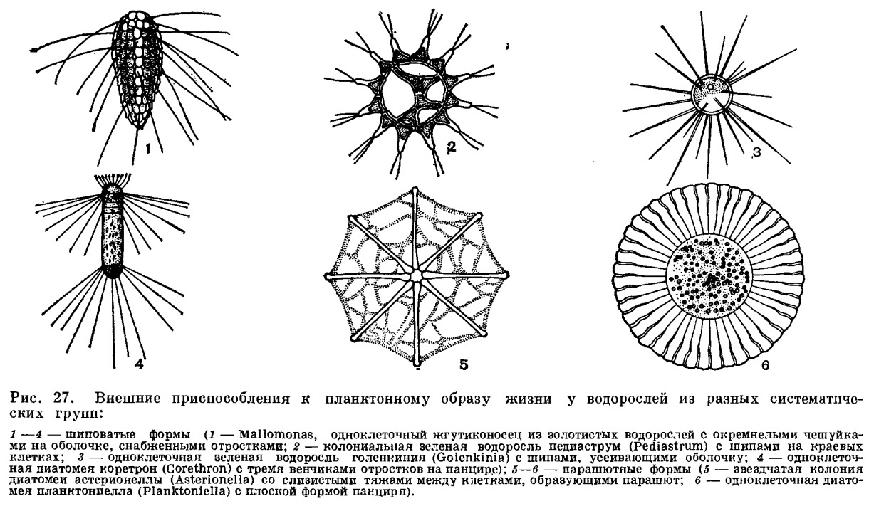 фото планктон для питания корюшки