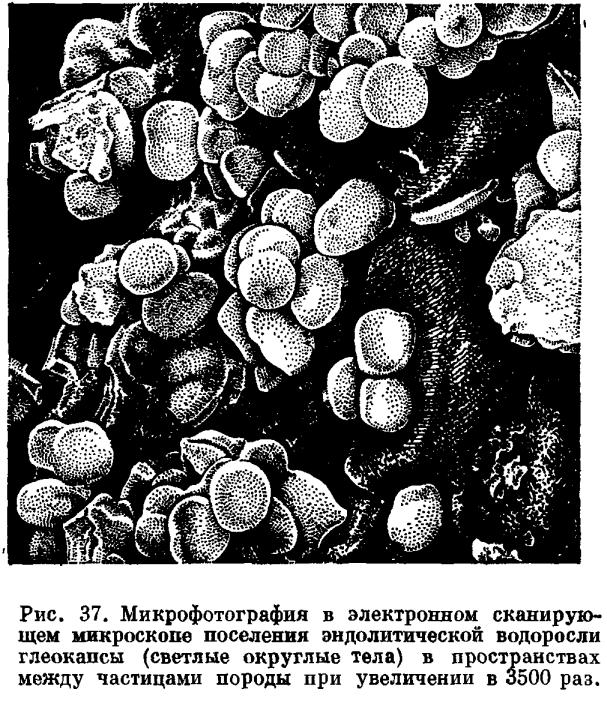 Все три типа поселения наземных водорослей на скалах получили