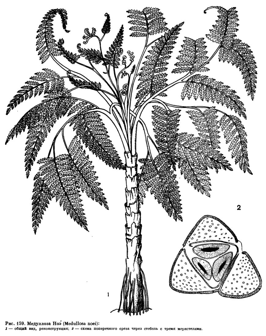 Внешний вид этих вымерших растений