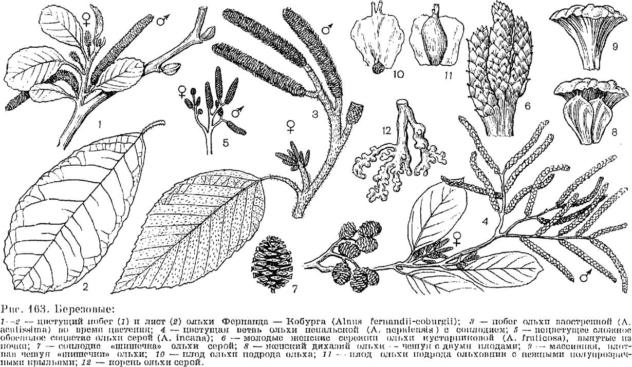 Виды листьев деревьев