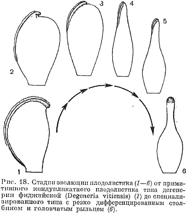 Плодолистики или карпеллы