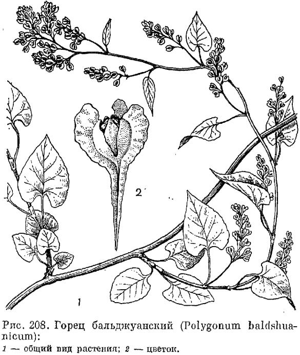 дорогие формула цветка к гречишных растений картинки справочник