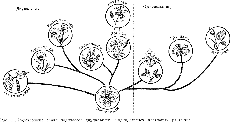 цветковых растений