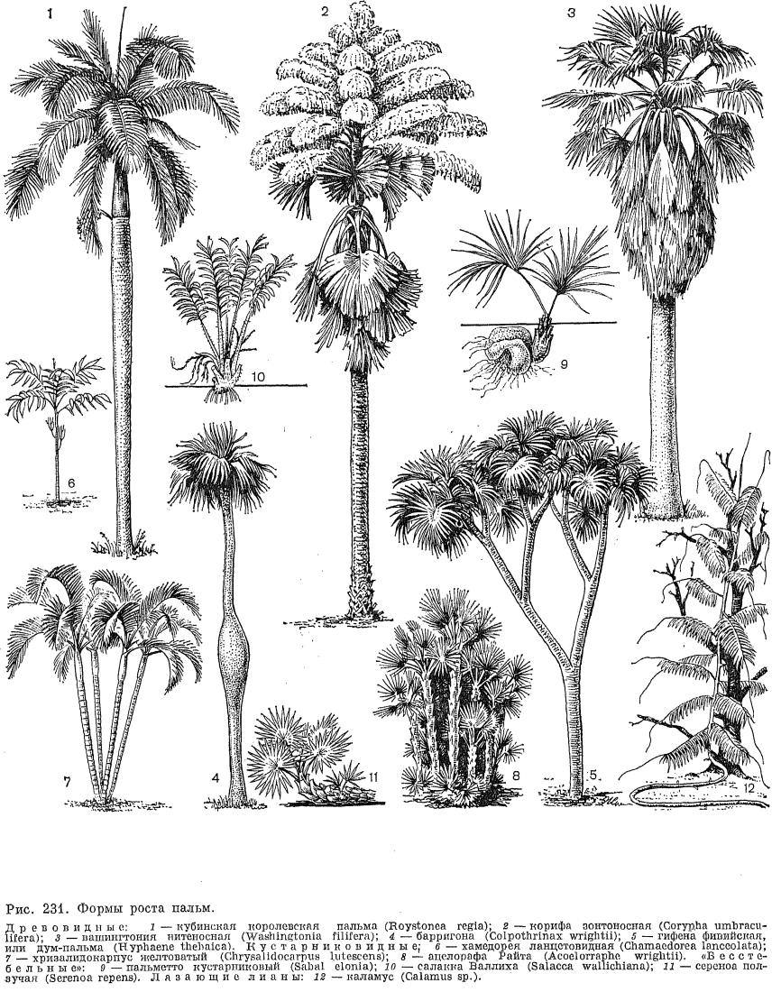 Ка��инки а��икан�кая пал�ма �и��нок picpoolru