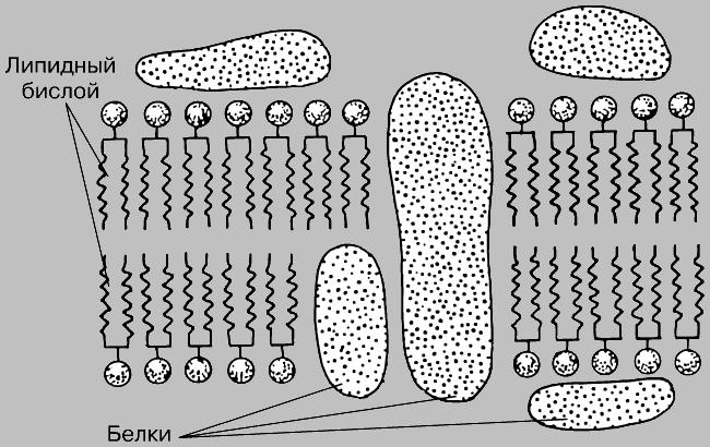 В клеточной