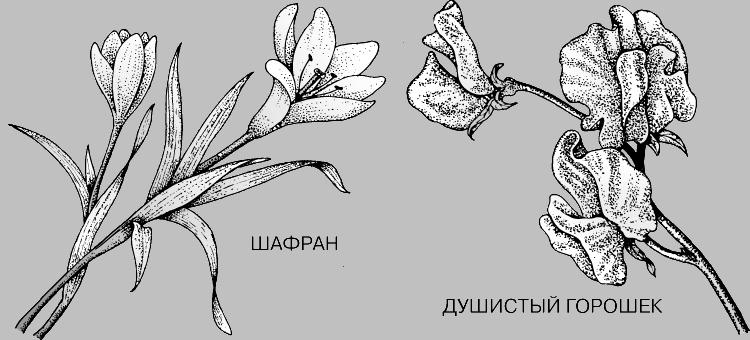 Голосемянные и цветковые растения, их признаки и ... Голосемянные и цветковые растения, их признаки и классификация в...
