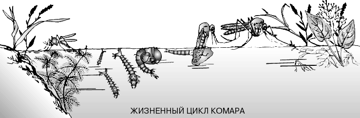 http://dic.academic.ru/pictures/enc_colier/1520_001.jpg