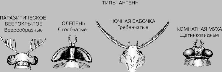 ТИПЫ АНТЕНН