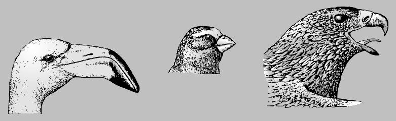 Клюв птицы для ребенка 134