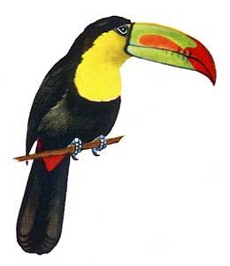 экзотические птицы названия и фото