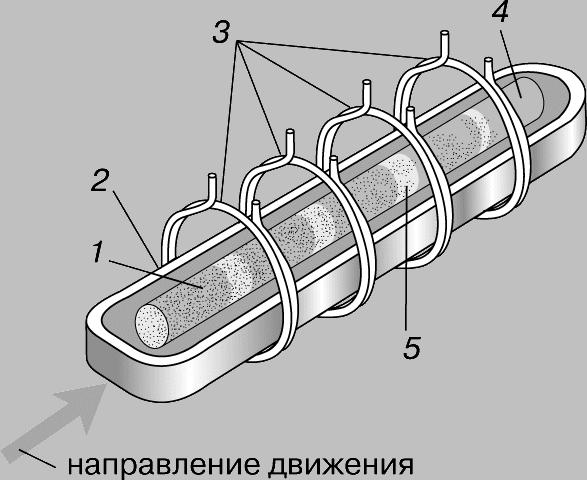 методика очистки организма от паразитов