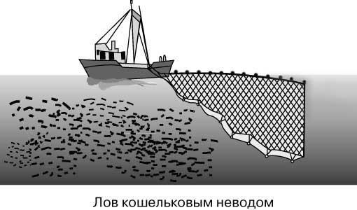 сеть для ловли рыбы с судна