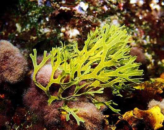 растения черноморского побережья картинки