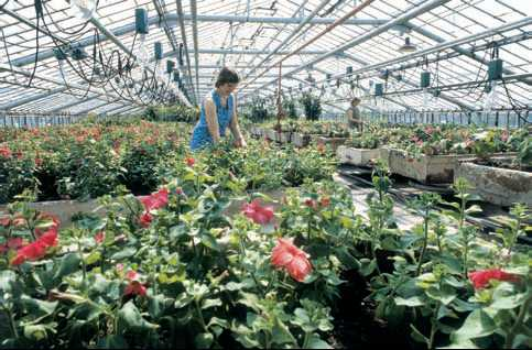 Рынок цветов на бэра астрахань доставка