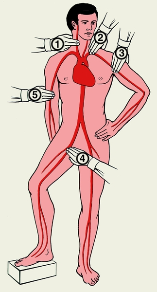 артерий на теле человека