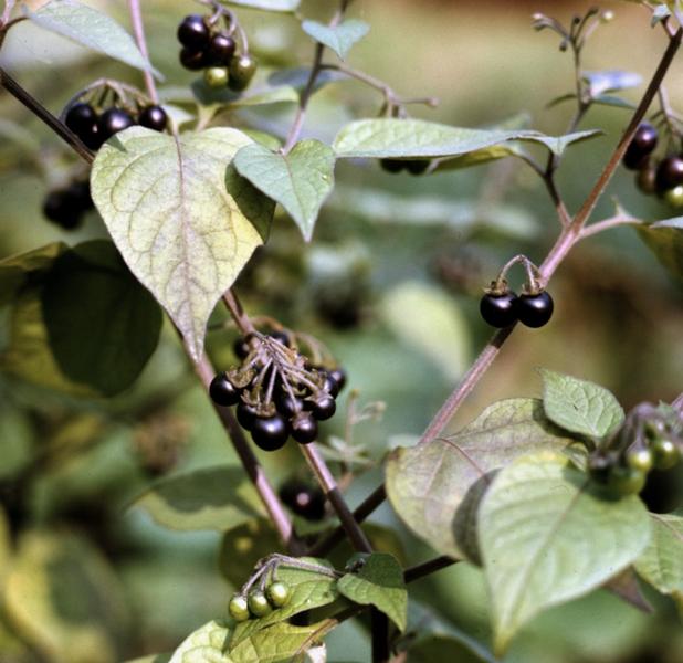 Часть растения действие
