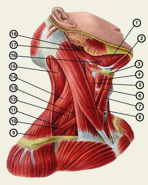 Какие виды спорта полезны при шейном остеохондрозе
