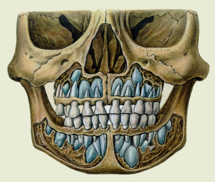 виниры на зубы челюсть