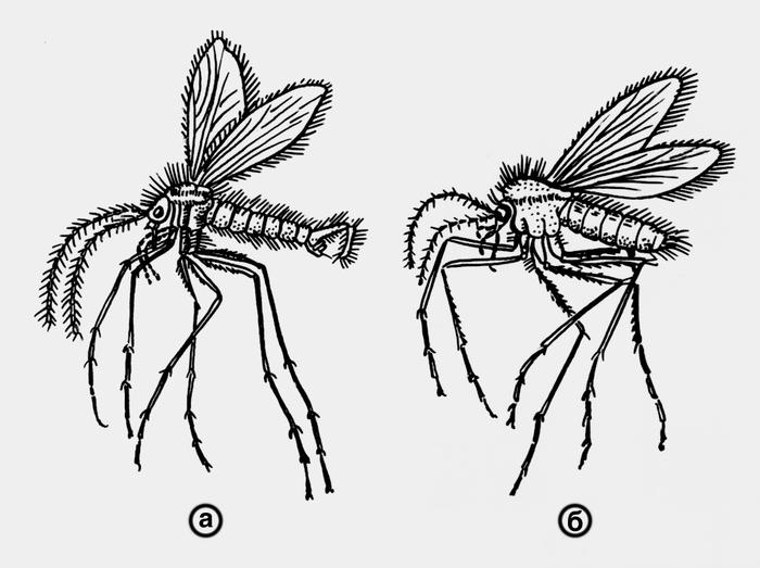 Руководство По Медицинской Энтомологии