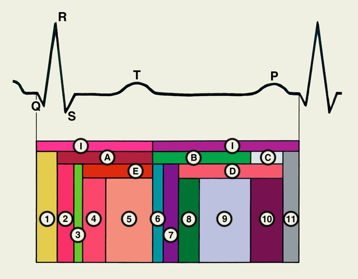 Цикл Сердечный